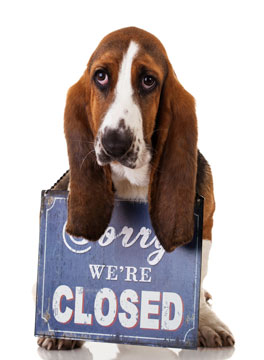 Dog holding a sorry we're closed sign